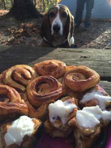 Delilah getting ready to steal a cinnamon roll