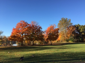 The Fall foliage at St. Mary's Lake