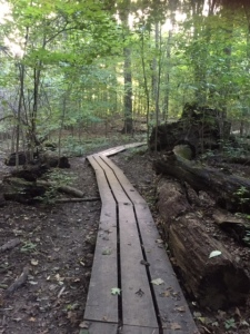 The wooded paths