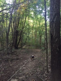 Delilah hiking the hilly trails