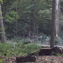 A very blurry deer