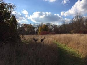 Prairie trail at Fernwood